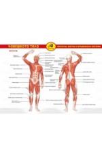 Помагалник Човешкото тяло